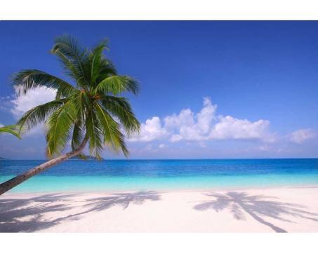 d00a5948600 MS-5-0194 Vliesové fototapety na zeď Pláž s palmou - 375 x 250 cm ...
